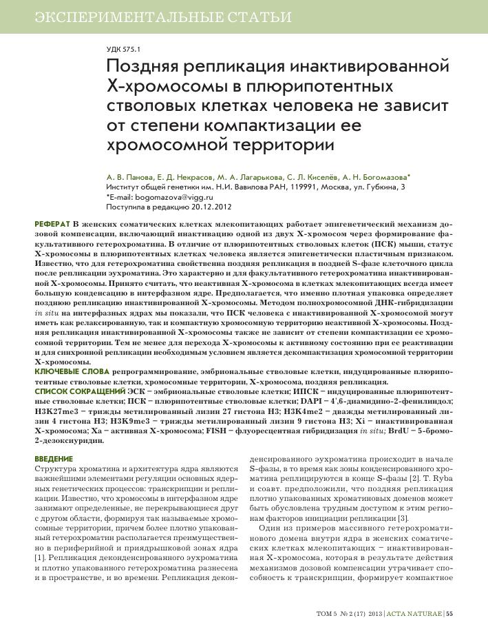 Дополнительный гетерохолматин на хромосоме